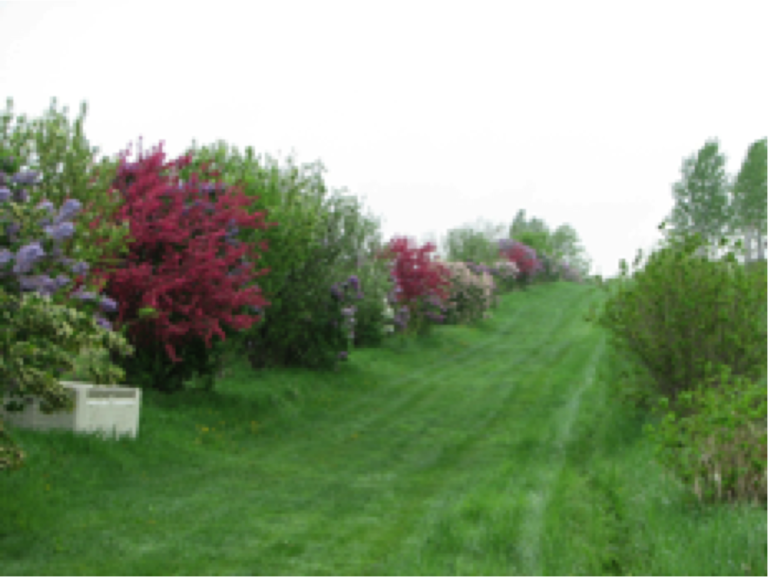 Plantations en agroforesterie avec AFTER