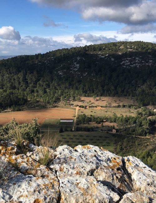 Serrano_plantation